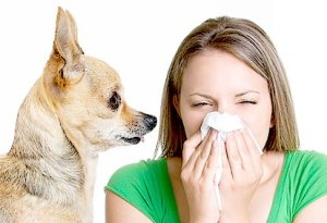 Young woman allergic to pet dander sneezing next to a small dog