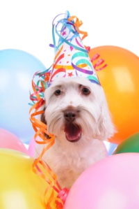 Party Dog with Balloons and Party Hat
